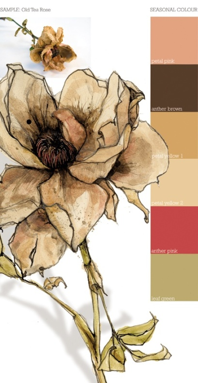 Tea Rose sketch and palette